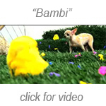 Jaye Rhee: Bambi video